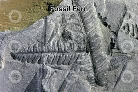 Botany Notes – On Fossil Pteridophytes – For W.B.C.S. Examination.