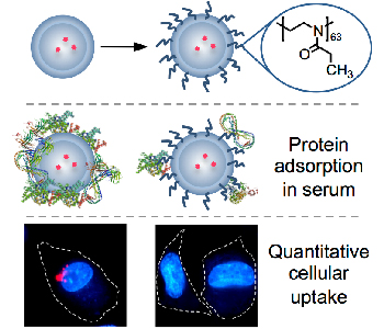 Uptake Proteins – Chemistry Notes – For W.B.C.S. Examination.