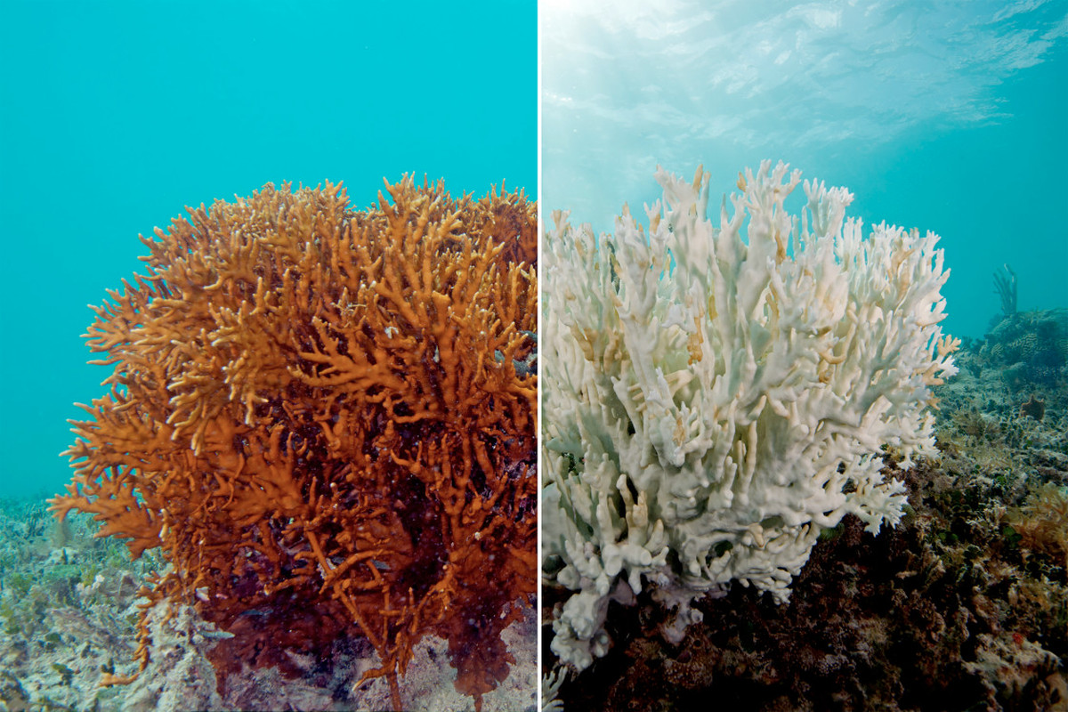 Coral Bleaching – Geography Notes – For W.B.C.S. Examination.
