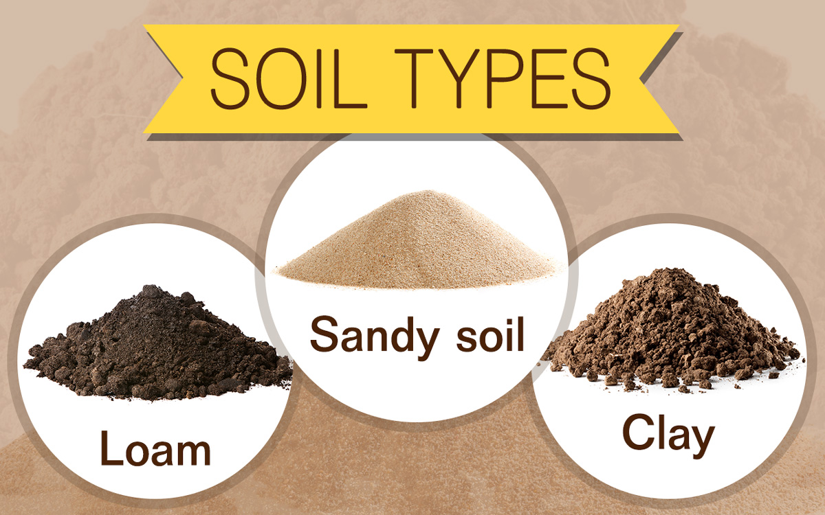 Geography Notes On – Soil – Types – For W.B.C.S. Examination.