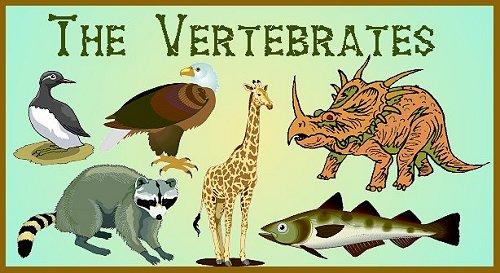 Vertebrates – General Science Notes – For W.B.C.S. Examination.