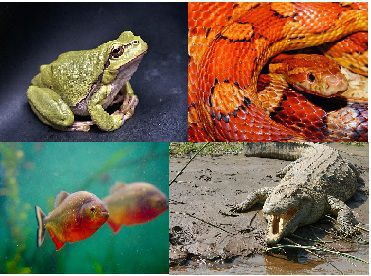 General Science Notes – On – Warm Blooded Animals – For W.B.C.S. Examination.