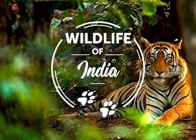 Wildlife Of India – Zoology Notes – For W.B.C.S. Examination.