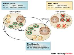 Cytoplasmic Inheritance – Zoology Notes – For W.B.C.S. Examination.
