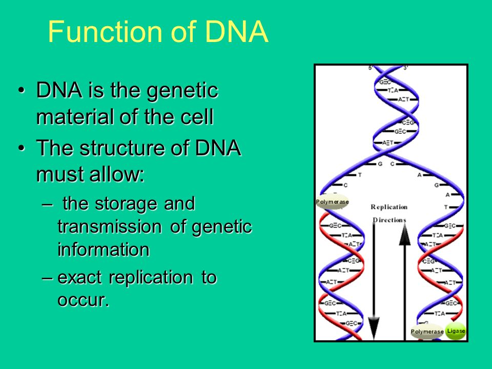 Function Of Genetic Material – Zoology Notes – For W.B.C.S. Examination.