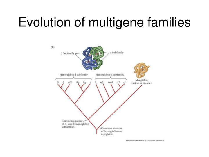 Multigene Families – Botany Notes – For W.B.C.S. Examination.