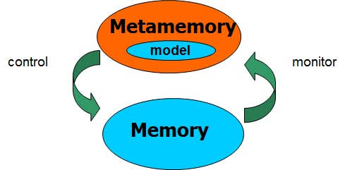 Psychology Notes On – Metamemory – For W.B.C.S. Examination.