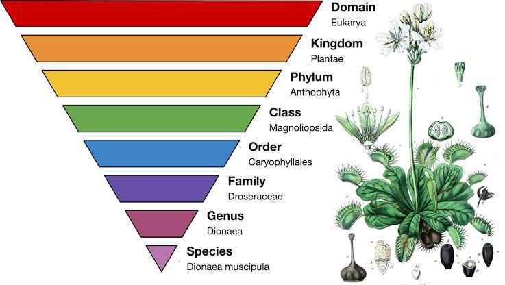Plant Resource Development – Botany Notes – For W.B.C.S. Examination.