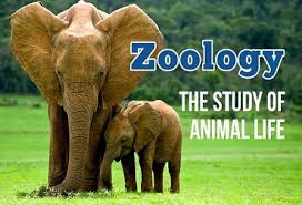 How Is Zoology As An Optional – For IAS Mains Examination.