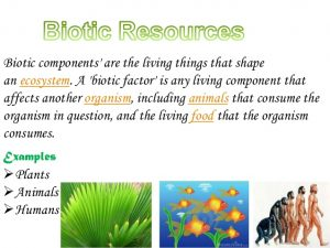 Geography Notes On – Biotic Resources Found In India – For W.B.C.S. Examination.