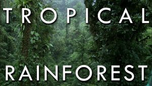 W.B.C.S. Examination Notes On – Tropical Rain Forests Of India – Geography Notes.