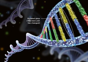 The Relationship Between Mutations And Polymorphisms – Zoology Notes – For W.B.C.S. Examination.