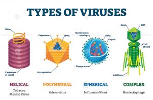 W.B.C.S. Examination Notes On – Classification Of Virus – Animal Husbandry Notes.
